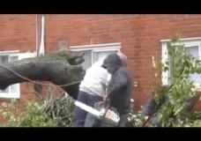 Cutting Down a Tree Branch Fail Video